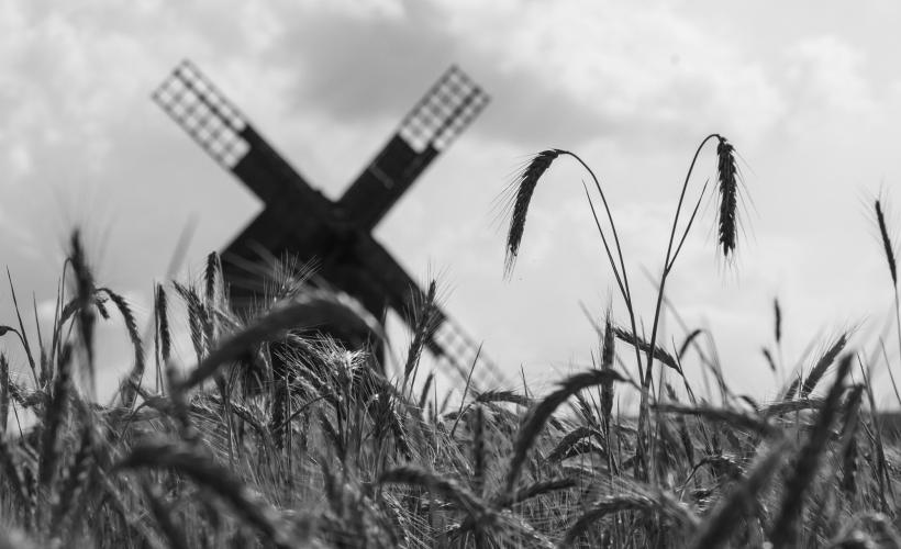 Windmill in cornfield