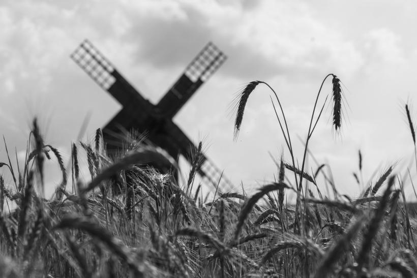 Foto windmile in corn field